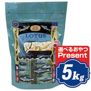 ロータス グレインフリー フィッシュレシピ 小粒 5kg Lotus ドッグフード 【正規品】