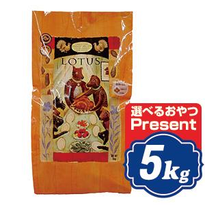 ロータス グレインフリー ターキーレシピ 小粒 5kg Lotus ドッグフード  【正規品】