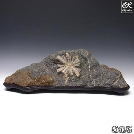 菊花石 約8.7kg 台付き 鑑賞石 原石 鉱物 鉱石 天然石 パワーストーン