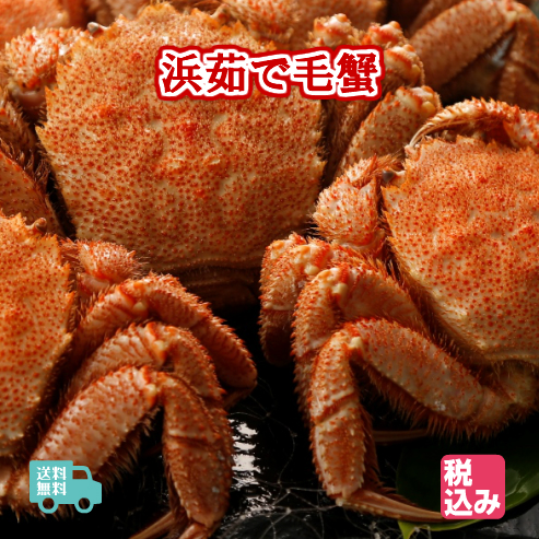 この毛蟹は冷凍品ではありません!!生ものですので、到着しましたらなるべくお早めにお召し上がり下さい!! 北海道産(太平洋) 浜茹 毛蟹 3ハイ(約1.5kg)上級堅蟹(カタガニ)のみを航空クール便で送付!!【送料無料】