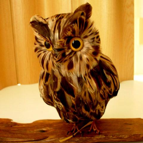 小鳥ファン必見 5☆大好評 可愛い動物オブジェ小鳥オブジェがプチプラで種類豊富なselectstoreです PUEBCO Owlふくろう ブラウン L フクロウ ミミズク 売店 雑貨通販 のオブジェ 置物まるで剥製のようにリアル プエブコ