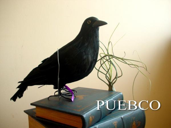 PUEBCO 誕生日/お祝い スーパーSALE セール期間限定 プエブコ Crow L L320 リアルなカラスオブジェ 剥製ではありません 鳥 黒 ハロウィンに 置物 雑貨通販