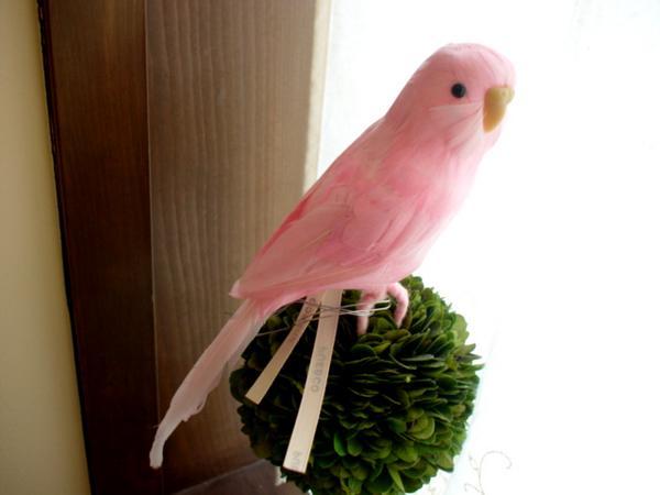 ★PUEBCO(プエブコ) Budgie ピンク セキセイインコ /剥製のようにリアル鳥オブジェ♪雑貨通販【RCP】