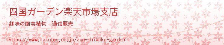 四国ガーデン楽天市場支店:宿根草・山野草・果樹苗など趣味の園芸植物を扱うお店です。