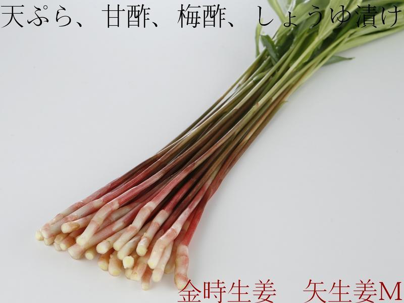 ☆伝統製法で作る色鮮やかで香り豊かな金時生姜の葉生姜☆『矢生姜M(30本入り)』天然の赤い色が特徴。愛知県産のはじかみ