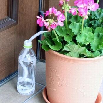 水やり楽だぞう 8本入り 好評 4本入り×2セット 送料無料 自然にペットボトルの水を吸い上げ 自動給水器 国際ブランド メール便 自動水やり器 植木鉢の土に給水します