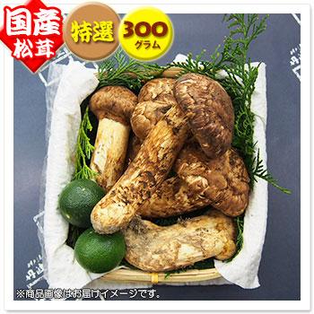 【国産松茸】:特選松茸:約300g:長野県産