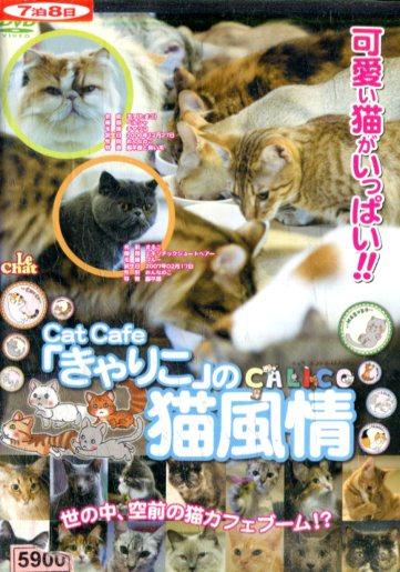 レンタル落ち中古品 卓抜 3500円以上で送料無料 きゃりこ 中古DVD 豪華な の猫風情 中古