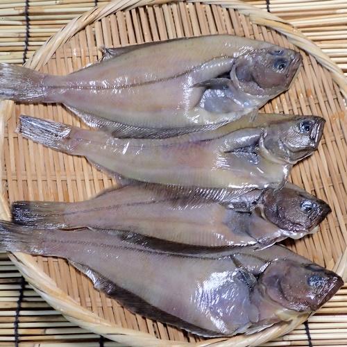 Uwa seafood wholesale dealer direct from Tottori Sakaiminato (red flatfish)  bottom treated freezing about 25cm10 匹浜