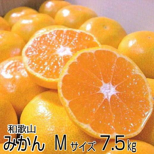 送料無料】濃厚な味のとろける美味しさ!和歌山産 温州みかん Mサイズ 7.5kg(約75個)