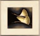 色紙銀額 鶴【代引き不可】【客室用品】【インテリア】【和室用】【額縁】【絵画】【1-821-8】