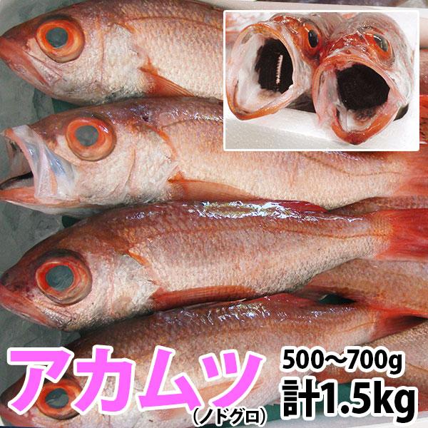 のどぐろ(アカムツ) 計1.5kg(500g~700g前後)脂のしたたる高級魚をご自宅で!【140405coupon300】【05P06May14】