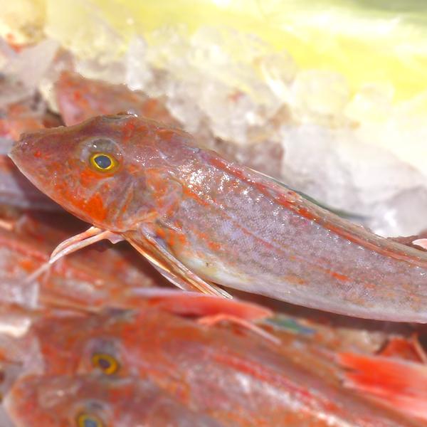 縁起物のお魚です 最新号掲載アイテム 淡白なのにコクのある旨みと脂がのって締まりのある身が両立 ホウボウ ほうぼう 計1kg 塩焼き 煮つけで召し上がれ 今ダケ送料無料 九十九島鮮魚 淡白な白身魚を刺身 500g前後2尾