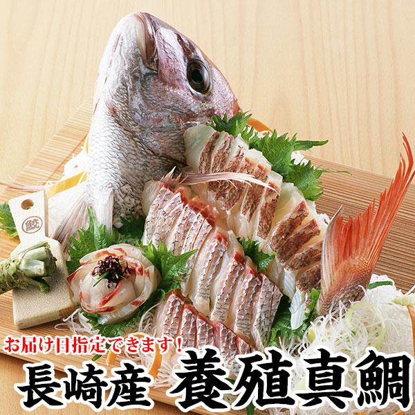 養殖だって負けてない 最高の環境で育った鯛をどうぞ メーカー公式 ギフト 長崎産真鯛 養殖マダイ 1.2kg前後1尾 お得なキャンペーンを実施中 プレゼント お祝い 2~3人前 環境にこだわった真鯛ギフト マダイ