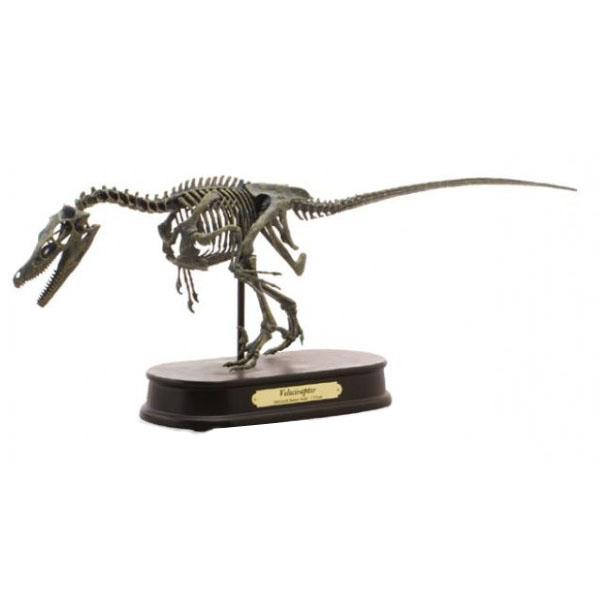 ダイナソー スケルトンモデル(DINOSAUR SKELETONMODEL) 恐竜 ヴェロキラプトル FDS606(70106)【玩具】