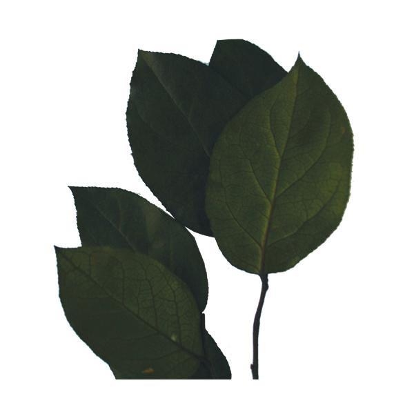 verdissimo ヴェルディッシモ レモンリーフ グリーンバルク 約1900g 33001 ガーデニング 花 植物 DIY セール,大得価