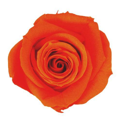 バラのプリザーブドフラワー! verdissimo ヴェルディッシモ バルク ミニローズ オレンジ 58926【ガーデニング・花・植物・DIY】
