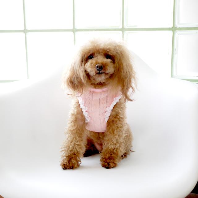 【犬服】 レース縁取り サマーニット タンクトップ ドッグウエア トイプードル・ダックス・チワワ・ ヨーキー 小型犬 pw685sty