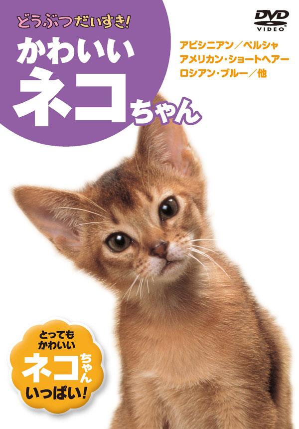 1628円以上送料無料 値引き 新品 どうぶつだいすき かわいいネコちゃん 格安