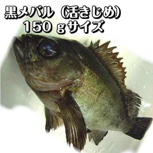 鮮魚・魚類>メバル