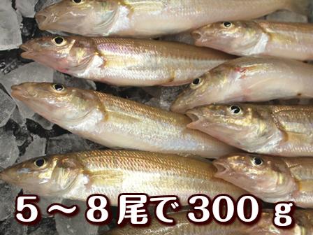 鮮魚・魚類>キス