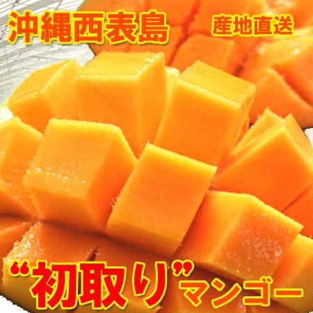 【送料無料】西表島先取りマンゴー大玉!7kg(18~20個)