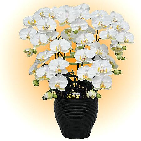 光触媒胡蝶蘭Mファレ(ミディータイプ)白黄5本