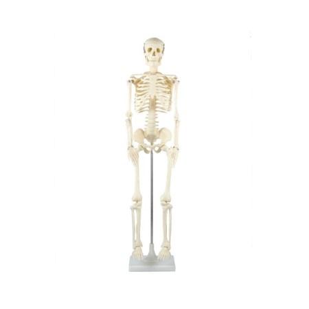 【ポイント10倍 5/11 20:00~5/18 1:59まで】人体骨格模型(品番:8850)【アーテック 工作 美術 製作 セット キット 理科】