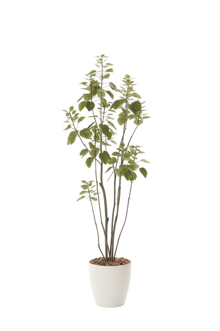 光触媒観葉植物 飾る フィカスブランチツリー1.7〔フロアタイプ(ハイサイズ)〕 5Lサイズ/光触媒 観葉植物 フェイクグリーン 花 胡蝶蘭 開店祝い 観葉植物 開業祝い 誕生祝い 造花 アートフレーム おしゃれ 飾る 5Lサイズ, Hamee(ハミィ):49e826ec --- sunward.msk.ru