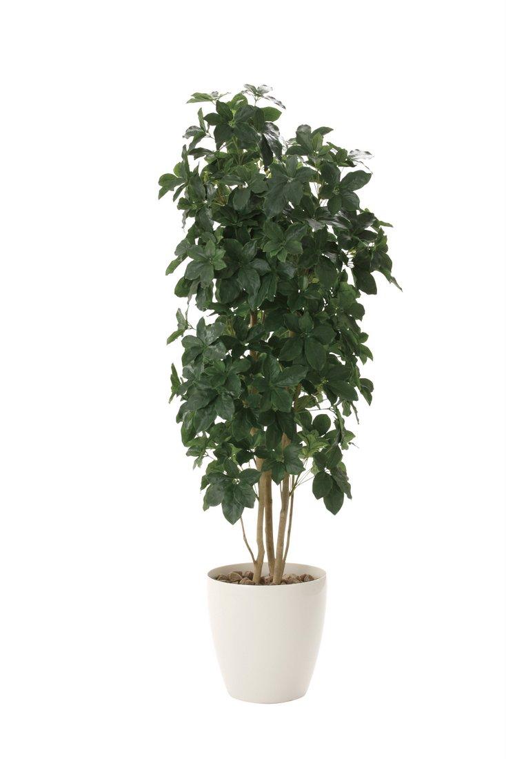 光触媒観葉植物 シェフレラ1.8〔フロアタイプ(ハイサイズ)〕/光触媒 観葉植物 フェイクグリーン 花 胡蝶蘭 開店祝い 開業祝い 誕生祝い 造花 アートフレーム おしゃれ 飾る 5Lサイズ 巣ごもり