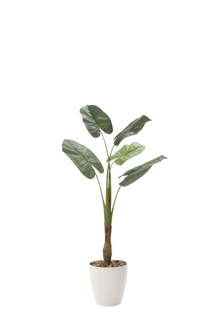 光触媒観葉植物 くわず芋1.35〔フロアタイプ(ミドルサイズ)〕/光触媒 観葉植物 フェイクグリーン 花 胡蝶蘭 開店祝い 開業祝い 誕生祝い 造花 アートフレーム おしゃれ 飾る 5Lサイズ 巣ごもり