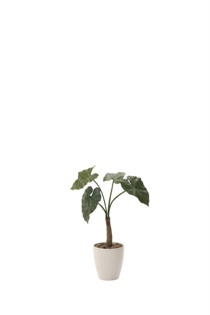 光触媒観葉植物 くわず芋78〔フロアタイプ(ハイサイズ)〕/光触媒 観葉植物 フェイクグリーン 花 胡蝶蘭 開店祝い 開業祝い 誕生祝い 造花 アートフレーム おしゃれ 飾る 5Lサイズ 巣ごもり