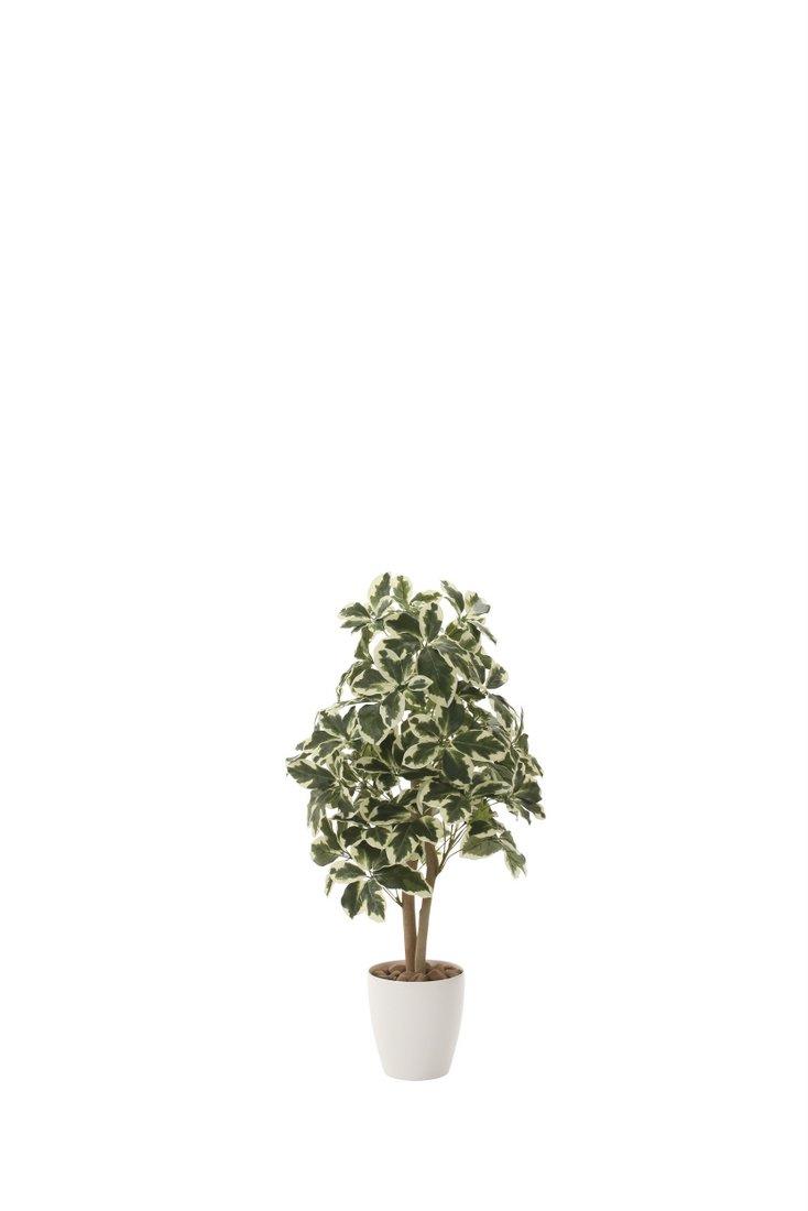 光触媒観葉植物 斑入りシェフレラ90〔フロアタイプ(ミドルサイズ)〕/光触媒 観葉植物 フェイクグリーン 花 胡蝶蘭 開店祝い 開業祝い 誕生祝い 造花 アートフレーム おしゃれ 飾る 5Lサイズ 巣ごもり