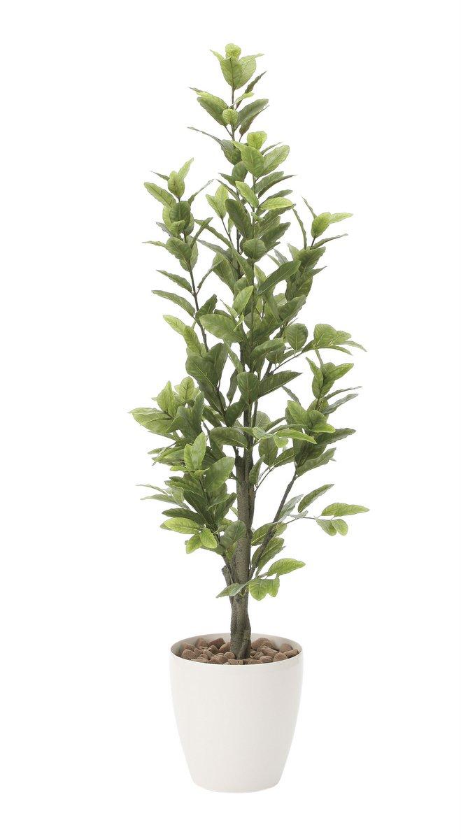 光触媒観葉植物 レモン1.6〔フロアタイプ(ハイサイズ)〕/光触媒 観葉植物 ウンベラータ フェイクグリーン 花 胡蝶蘭 開店祝い 開業祝い 誕生祝い 造花 アートフレーム おしゃれ 飾る 5Lサイズ