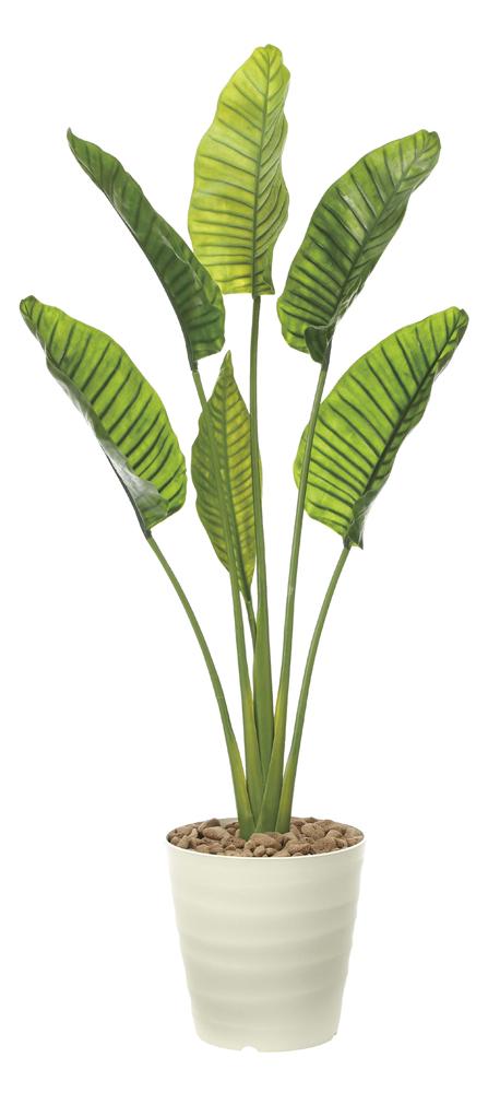 光触媒観葉植物 オーガスタL1.8(ポリ製)/光触媒〔フロアタイプ〕/光触媒 観葉植物 ウンベラータ フェイクグリーン 花 胡蝶蘭 開店祝い 開業祝い 誕生祝い 造花 アートフレーム おしゃれ 5Lサイズ 巣ごもり