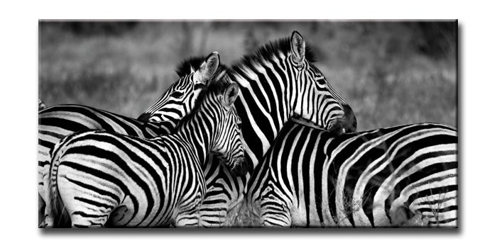 キャンバスアート アーバンスタイルL ゼブラ(URBAN STYLE L Zebra-Mono)/額入り 額装込 風景画 絵画 絵 壁掛け アート リビング 玄関 トイレ インテリア かわいい 壁飾り 癒やし プレゼント ギフト アートパネル ポスター アートフレーム おしゃれ 飾る 4Lサイズ 巣ごもり