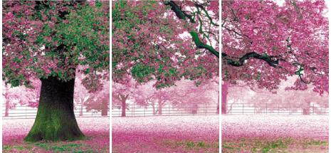 アートフレーム ND Concept Frame 3枚set 桜/インテリア 壁掛け 額入り 額装込 風景画 油絵 ポスター アート アートパネル リビング 玄関 プレゼント モダン アートフレーム おしゃれ 飾る 5Lサイズ 巣ごもり