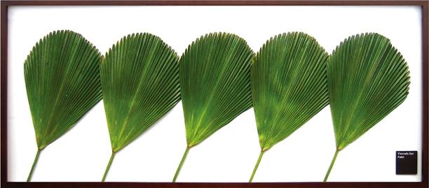 リーフパネル 絵画 Vanuatu fan palm(バヌアツ ファン バーム)/インテリア 壁掛け 額入り 額装込 風景画 油絵 ポスター アート アートパネル リビング 玄関 プレゼント モダン アートフレーム おしゃれ 飾るL 巣ごもり