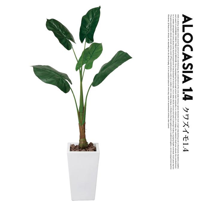 くわず芋1.4(alocasia odora) 光触媒 イミテーショングリーン 送料無料
