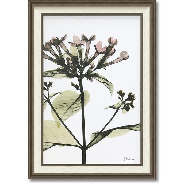 【送料無料】【取り寄せ】 ユーパワー STYLISH ART X-RAY キャンバスアート Mサイズ 「ブバルディア」 XR-12003【代引き不可】
