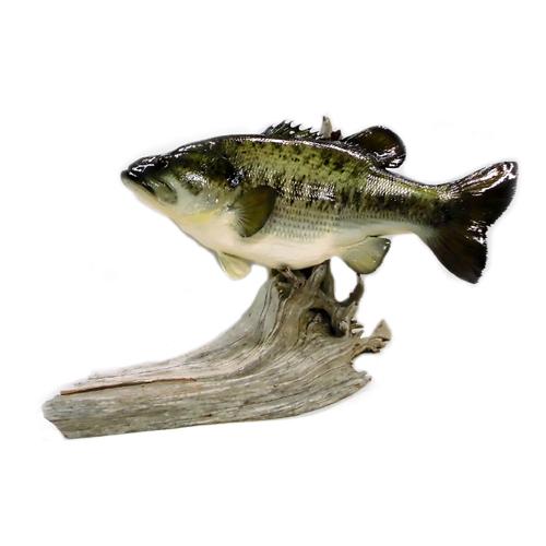 BlackBass/ブラックバス レプリカ/インテリア 置き型タイプ【釣り/フィッシング/釣り具/釣具】【インテリア/雑貨/ギフト/