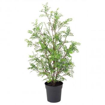 観葉物 シルクジャスミンポット(L) グリーン 1本セット P4829 アレンジメント メーカ直送品  代引き不可/同梱不可
