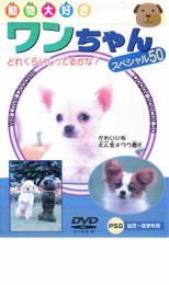 商い ワンちゃんスペシャル50 趣味 実用 中古 格安店 メール便可 ケース無:: DVD