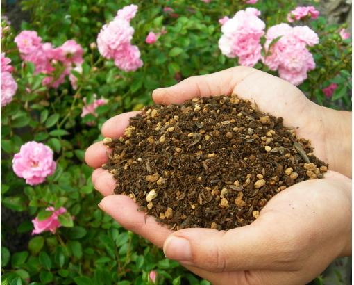 バラの家 培養土