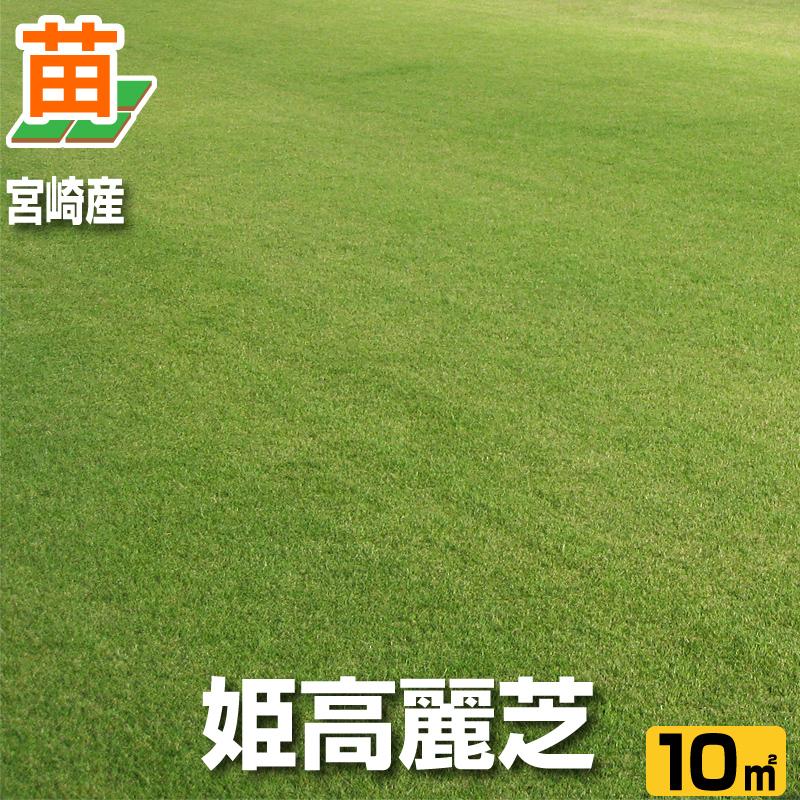 送料無料/ 宮崎産 姫高麗芝(張り芝用) 10平米(3坪分) /芝生 暖地型 /天然芝 園芸