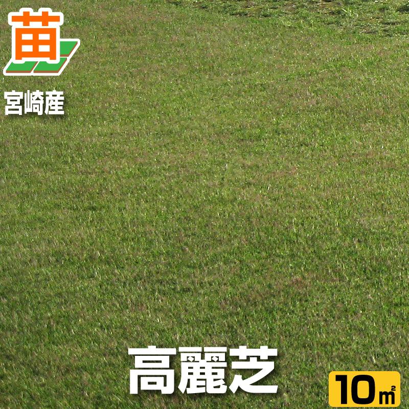 送料無料/ 宮崎産 高麗芝(張り芝用) 10平米(3坪分) /芝生 暖地型 /天然芝 園芸