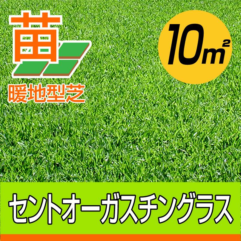 /代引不可/セントオーガスチングラス(張り芝用) 宮崎産 10平米(3坪分) 天然芝 園芸 暖地型芝 芝生の苗 送料無料