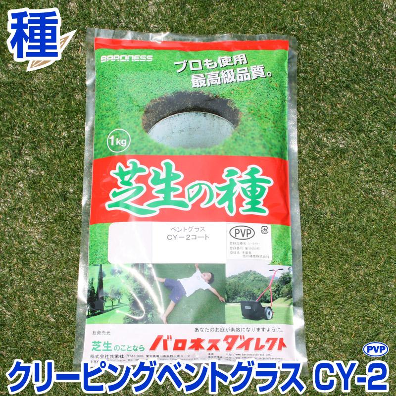 超高級芝生ニュークリーピングベントグラス 新品種CY-2(シーワイツー) 1kg お庭の広さ15~24坪用 バロネス寒地型 芝生の種 多年草 発芽適温摂氏15~25度程度です。 CY-2/あす楽対応/共栄社/【店頭受取対応商品】