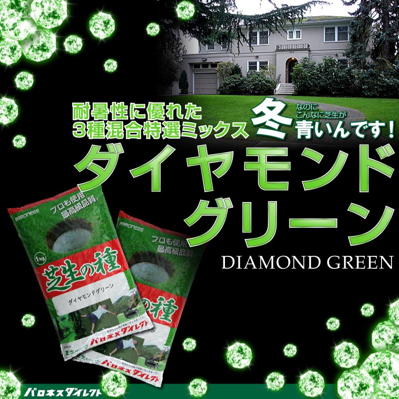 寒地型 芝生の種 ダイヤモンドグリーン