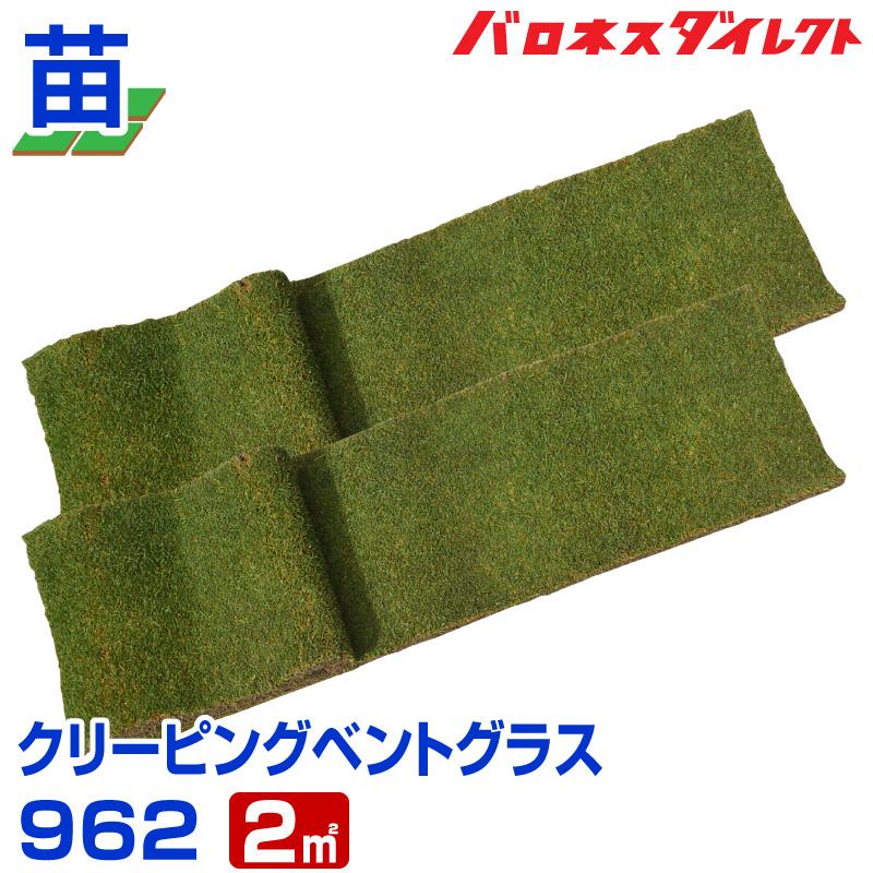 クリーピングベントグラス 962(張り芝用) 2平米(約0.6坪分) 天然芝 園芸 寒地型芝 芝生の苗 送料無料